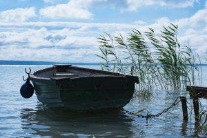 Vedessä kaislikon vieressä oleva puinen soutuvene.