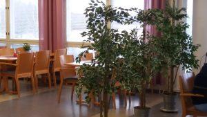Ravintola Syreenin ruokasali, vaaleita puisia pöytiä ja tuoleja, vihreitä kasveja.