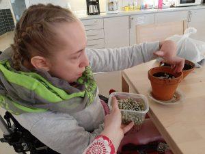 Asukas pitää kädessä rasiaa, jossa on herneitä. Hän pudottaa niitä kukkaruukkuun kasvamaan.